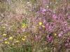 heide-wildpflanzen