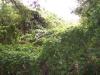 rankende-gruenpflanzen