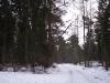 winterliche-waldlandschaft